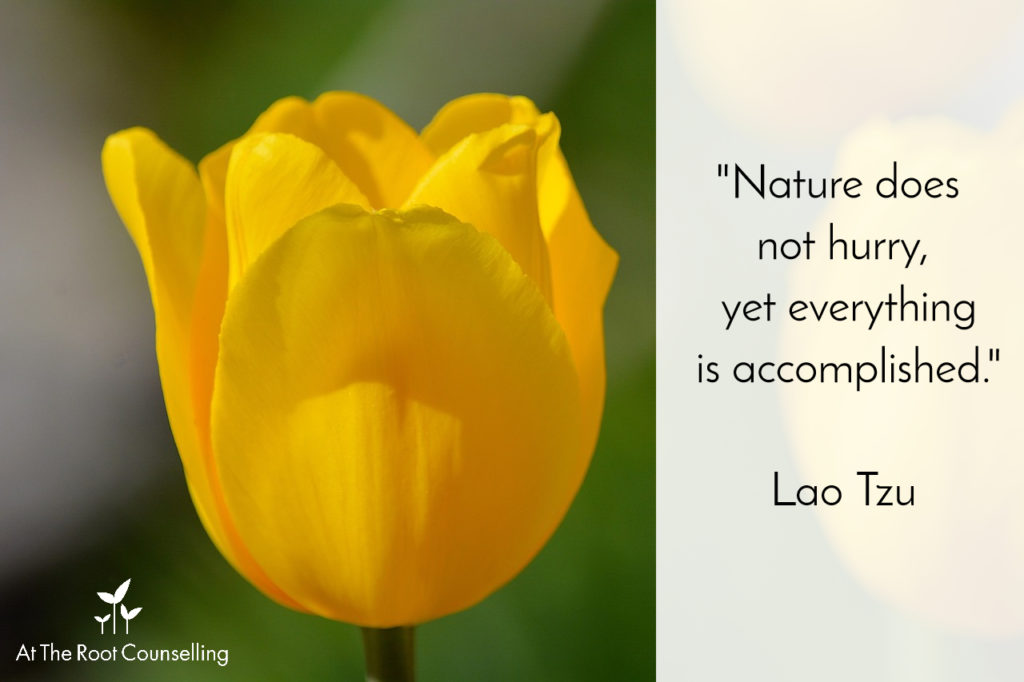 At The Root Counselling_Quote #8